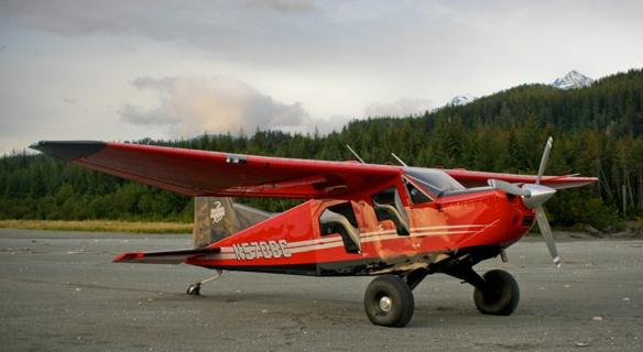 Bush Hawk 01